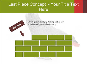 0000063059 PowerPoint Template - Slide 46