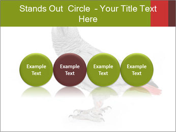0000063059 PowerPoint Template - Slide 76