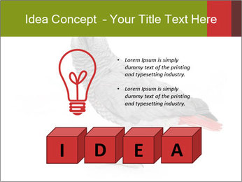 0000063059 PowerPoint Template - Slide 80