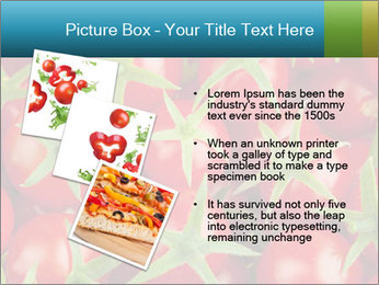 0000063172 PowerPoint Template - Slide 17