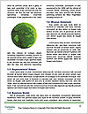 0000063259 Word Templates - Page 4