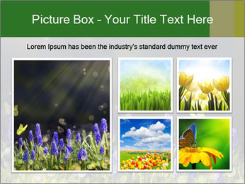 Spring Meadow Full ofFlowers PowerPoint Templates - Slide 19