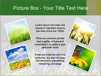 Spring Meadow Full ofFlowers PowerPoint Template - Slide 24