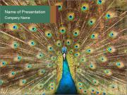 Colorful Peacock PowerPoint Templates