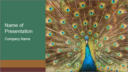Colorful Peacock PowerPoint Template