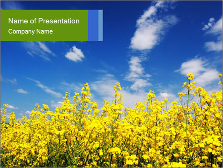Ukrainian Field Landscape PowerPoint Template