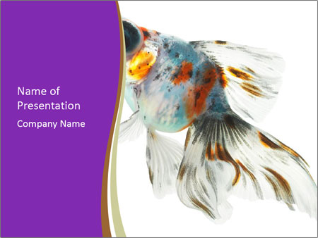 Beautiful Fish in Aquarium PowerPoint Template