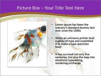 Beautiful Fish in Aquarium PowerPoint Template - Slide 13