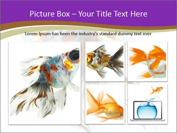 Beautiful Fish in Aquarium PowerPoint Template - Slide 19