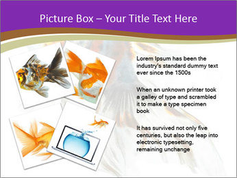Beautiful Fish in Aquarium PowerPoint Template - Slide 23