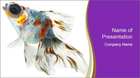 Beautiful Fish in Aquarium PowerPoint Template - Slide 1