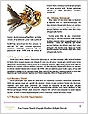 0000063335 Word Templates - Page 4