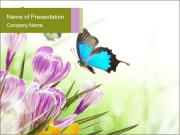 Spring Flowers and Blue Butterfly PowerPoint Templates
