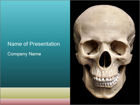 Real Model of Human Skull PowerPoint Templates