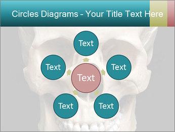 Real Model of Human Skull PowerPoint Templates - Slide 78