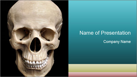 Real Model of Human Skull PowerPoint Template