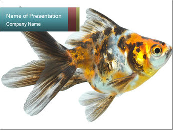 Golden Fish with Unusual Ornament PowerPoint Template - Slide 1