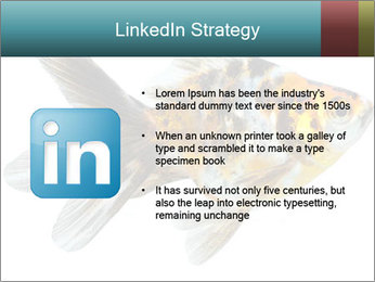 Golden Fish with Unusual Ornament PowerPoint Template - Slide 12