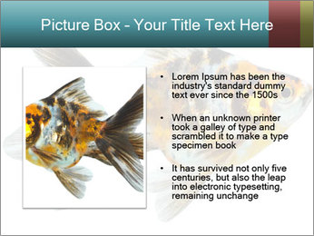 Golden Fish with Unusual Ornament PowerPoint Template - Slide 13