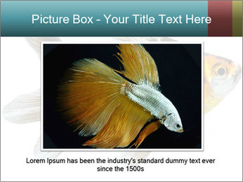 Golden Fish with Unusual Ornament PowerPoint Template - Slide 15