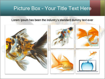 Golden Fish with Unusual Ornament PowerPoint Template - Slide 19