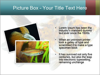 Golden Fish with Unusual Ornament PowerPoint Template - Slide 20