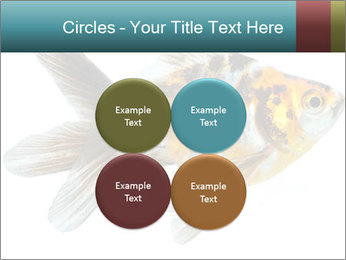 Golden Fish with Unusual Ornament PowerPoint Template - Slide 38
