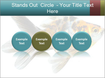 Golden Fish with Unusual Ornament PowerPoint Template - Slide 76