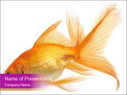 Beautiful Golden Fish PowerPoint Templates