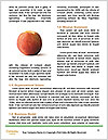 0000063446 Word Templates - Page 4