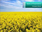 Yellow Field in Sunlight PowerPoint Templates