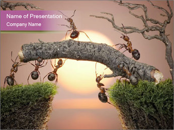 Cartoon Ants Building Bridge PowerPoint Templates - Slide 1