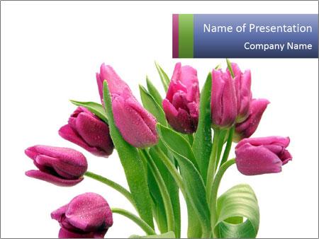 Bouquet of Purple Tulips PowerPoint Templates