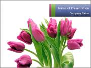 Bouquet of Purple Tulips PowerPoint Templates