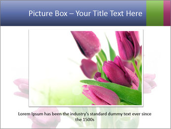 Bouquet of Purple Tulips PowerPoint Templates - Slide 16