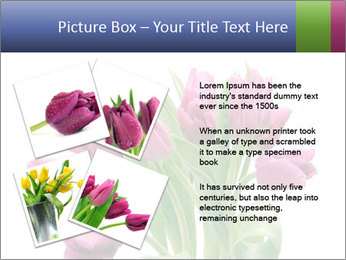 Bouquet of Purple Tulips PowerPoint Templates - Slide 23