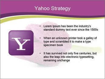 Wet Purple Tulip PowerPoint Templates - Slide 11