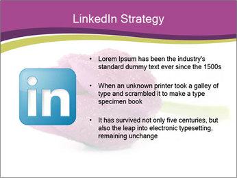 Wet Purple Tulip PowerPoint Templates - Slide 12