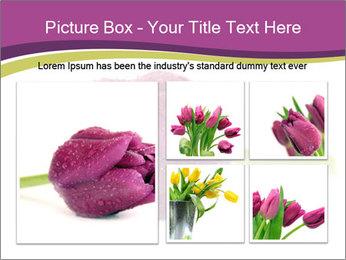 Wet Purple Tulip PowerPoint Templates - Slide 19