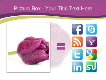 Wet Purple Tulip PowerPoint Templates - Slide 21