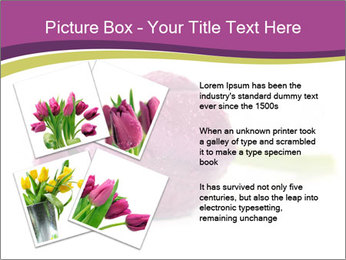 Wet Purple Tulip PowerPoint Templates - Slide 23