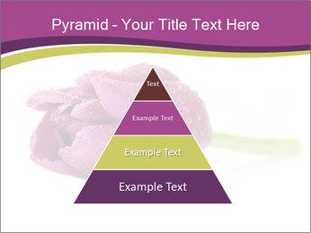 Wet Purple Tulip PowerPoint Templates - Slide 30