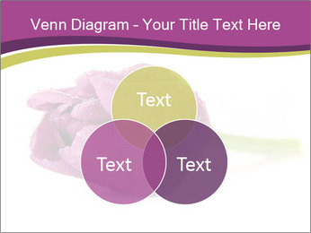 Wet Purple Tulip PowerPoint Templates - Slide 33