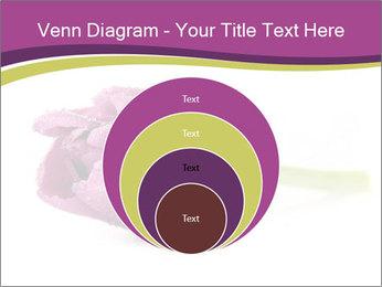 Wet Purple Tulip PowerPoint Templates - Slide 34