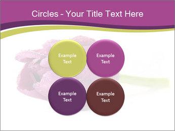 Wet Purple Tulip PowerPoint Templates - Slide 38