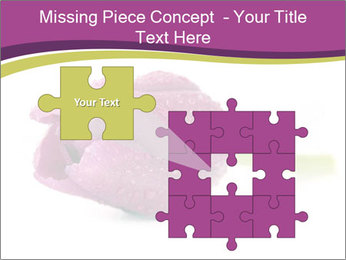 Wet Purple Tulip PowerPoint Templates - Slide 45