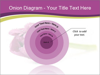Wet Purple Tulip PowerPoint Templates - Slide 61