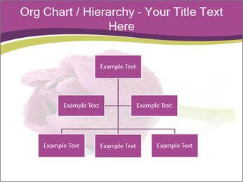 Wet Purple Tulip PowerPoint Templates - Slide 66