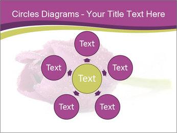 Wet Purple Tulip PowerPoint Templates - Slide 78