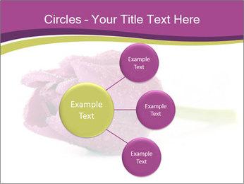 Wet Purple Tulip PowerPoint Templates - Slide 79